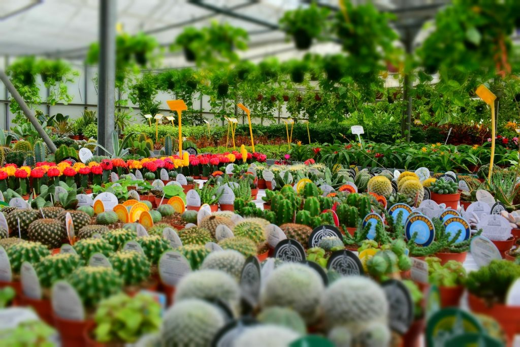 Why Should You Buy Plants Online From Plant Suppliers Melbourne?